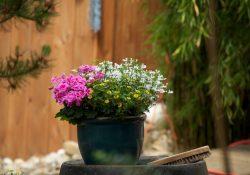 Vælg de rigtige urtepotter til haven, altanen og vindueskarmen